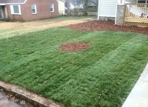 AFTER -FESCUE SOD